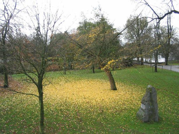Maastricht leaves