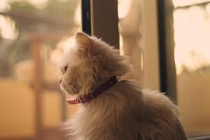 Balas Dendam Mimi, Kucing Sepupuku 6