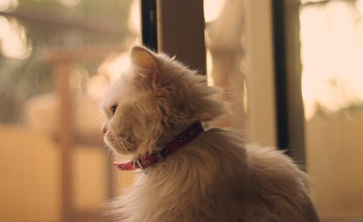 Balas Dendam Mimi, Kucing Sepupuku 3