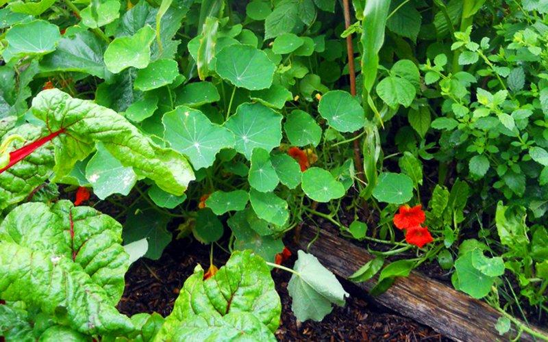 Nove consigli per avere più raccolto dal tuo orto-giardino