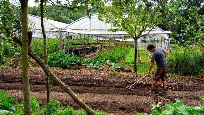 Ferme bec hellouin formazione permacultura