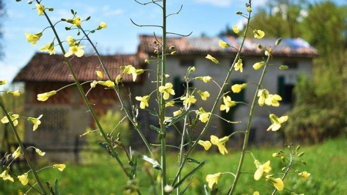Corso permacultura laspontanea
