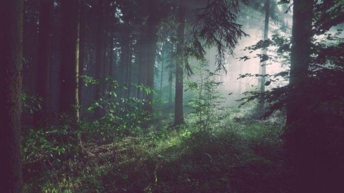 Lost Francesca Bonini ecologia profonda