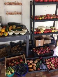Les récoltes d'un potager en permaculture