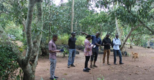 at Andrew Kalema's bamboo farm