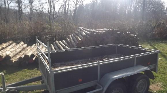 Timber (12)