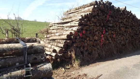 Timber (15)