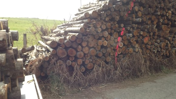 Timber (19)