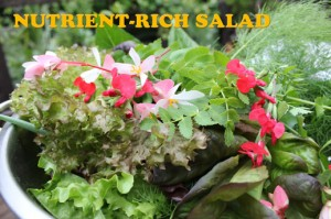 nutrient_rich_salad