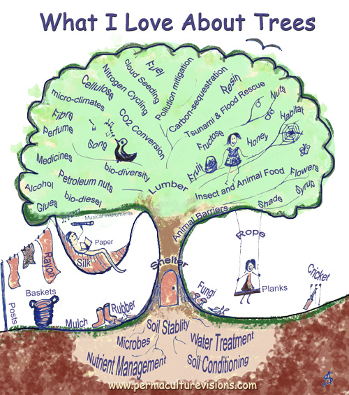 What-I-love-about-trees
