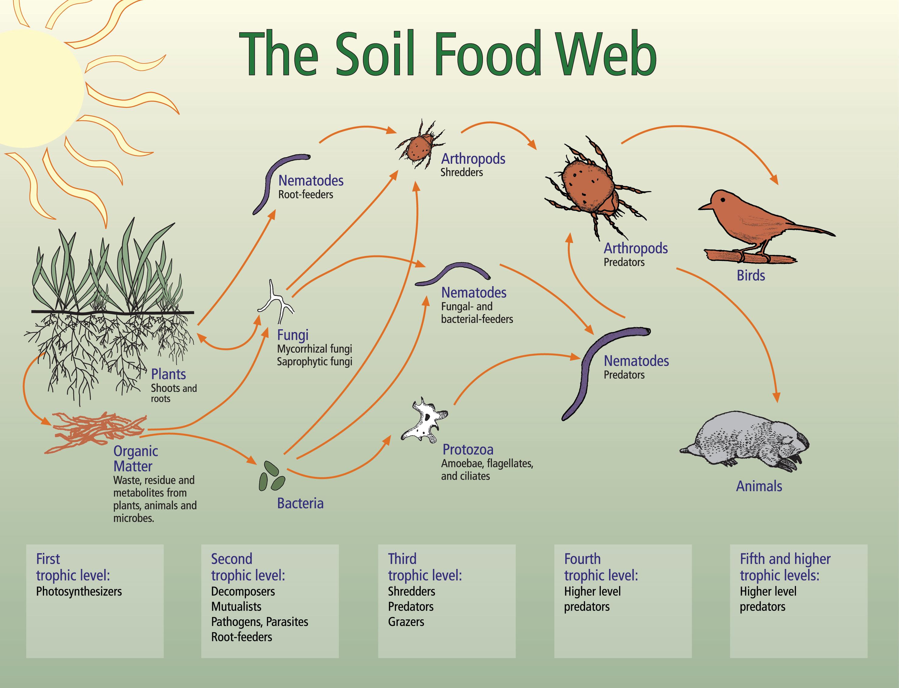Building Soil Health By Dr Elaine Ingham Pvp096go