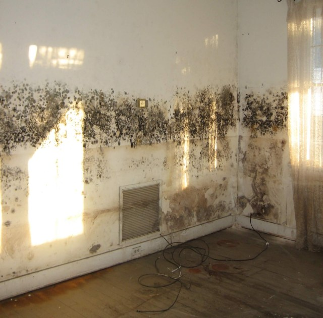 Removing Mould From Walls – How To Clean Mould