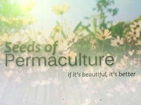 Seeds Of Permaculture - Doc