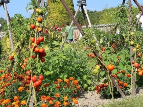 chateau de la bourdaisiere permaculture