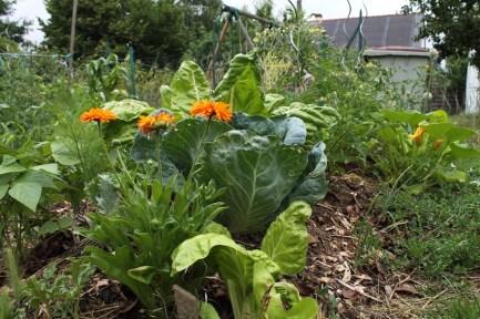 Jardiner futé permaculture butte