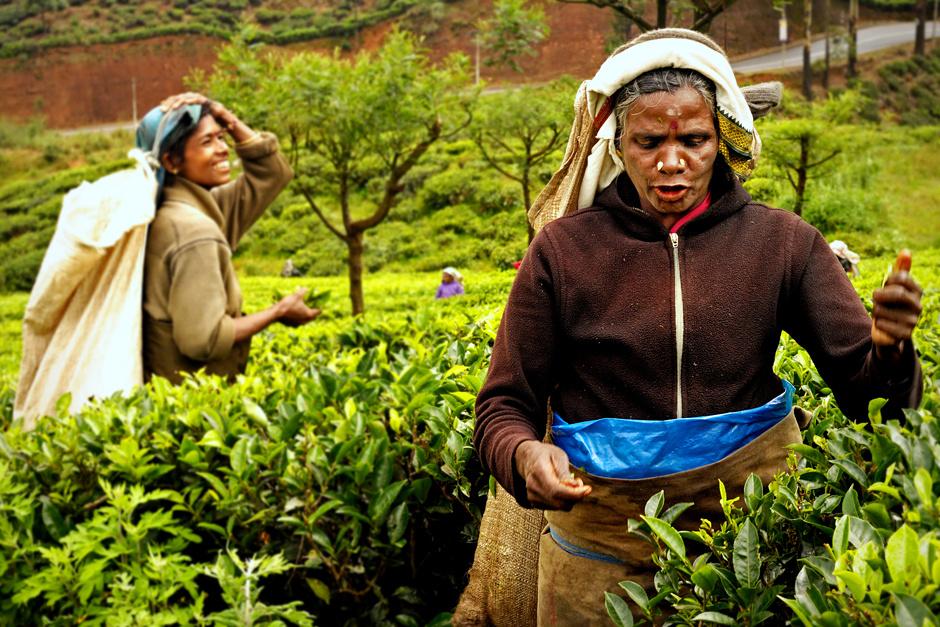 7. Sri Lanka, Nuwara Eliya. Praca kobiet, wydająca się na pierwszy rzut oka całkiem przyjemna, w rzeczywistości nie należy do zajęć łatwych ani dobrze płatnych. (Fot. Ania Błażejewska)