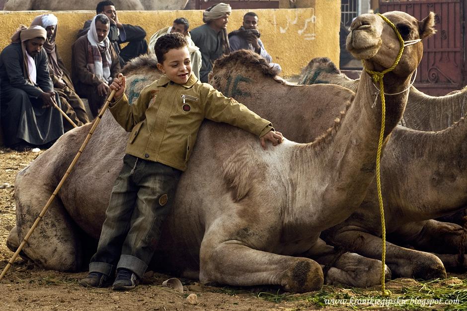 08_Camel_market_Birkasz