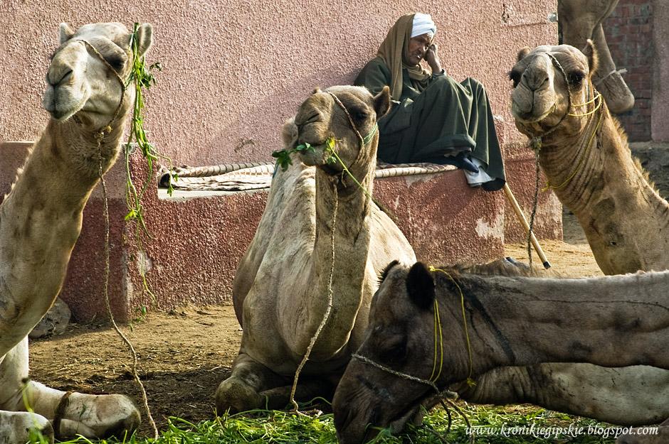 09_Camel_market_Birkasz
