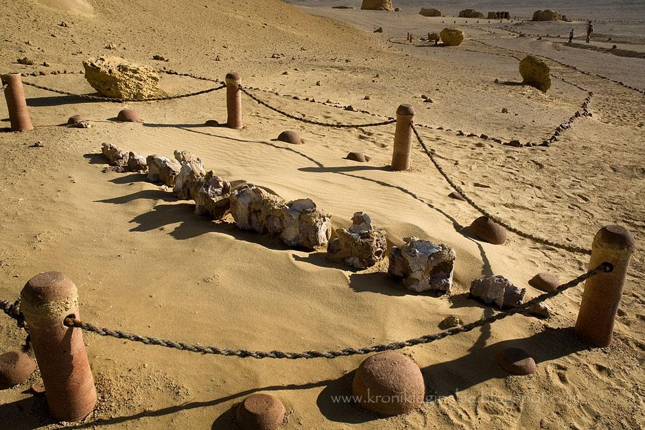 9. EGIPT, Dolina Wielorybów (Wadi Hittan). 40 milionów lat temu, kiedy klimat był znacznie cieplejszy, a na biegunach naszej Ziemi nie istniały wielkie lodowce, na terenie Egiptu pluskały się olbrzymie wieloryby, rekiny i inne morskie potwory. Następnie klimat zmieniał się jeszcze kilka razy, aż w końcu nieco ponad 10 tysięcy lat temu, znów się ocieplił dzięki czemu powstała Sahara. Dzisiaj w Wadi Hittan możemy zobaczyć szkielety żyjących tutaj basilosaurusów – przodków wielorybów. (Fot. Anna Krukowska)