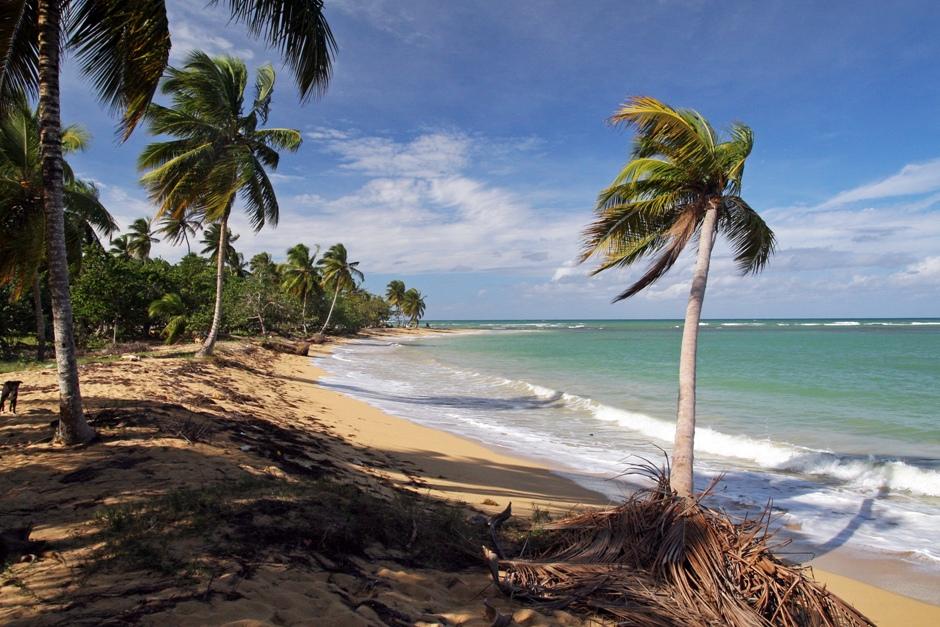 7. DOMINIKANA, Las Terrenas. Plaże oferują klasyczne widoki - błękitne niebo, przejrzysta woda, jasny piasek i pochylona palma kokosowa. (Fot. Ewa Serwicka)