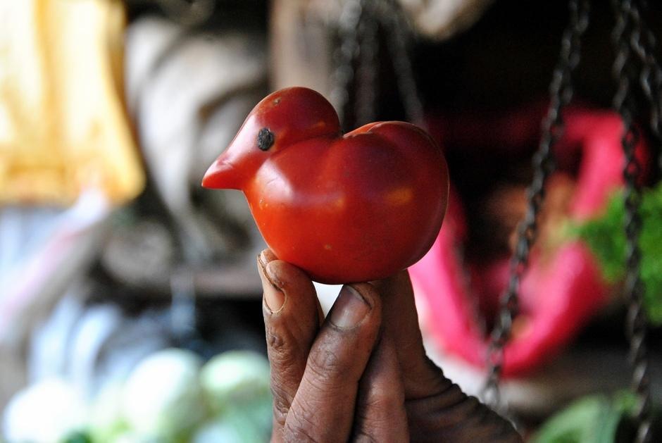 17. INDIE, Ooty. Na targu można trafić na ciekawe wybryki natury. Taki pomidor trafił się w przyrodzie. Nawet oko kurczaczka to naturalna skaza. (Fot. Anna Manczyk)