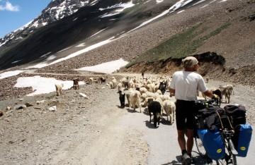 Indie, Ladakh. Okolice przełęczy Baralacha. (Fot. Piotr Strzeżysz)