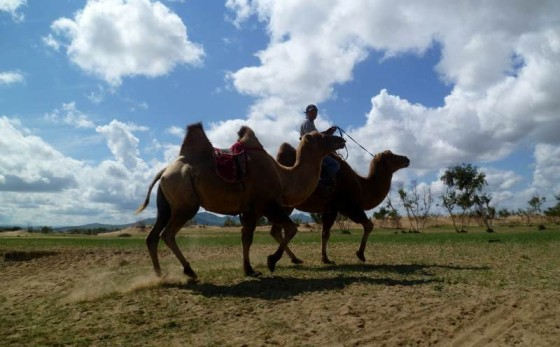 Podróżować można na przykład na wielbłądzie