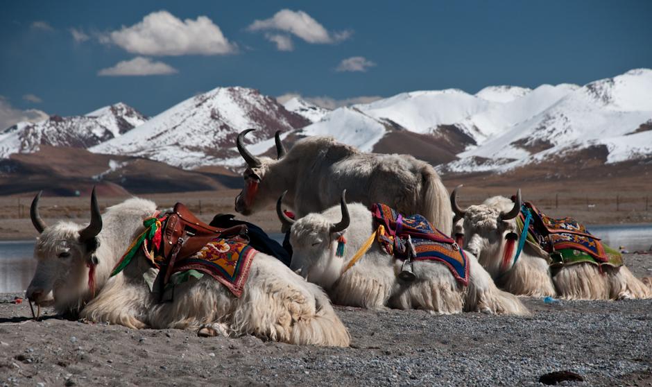Jezioto Namtso w Tybecie. Zdjęcia z podróży