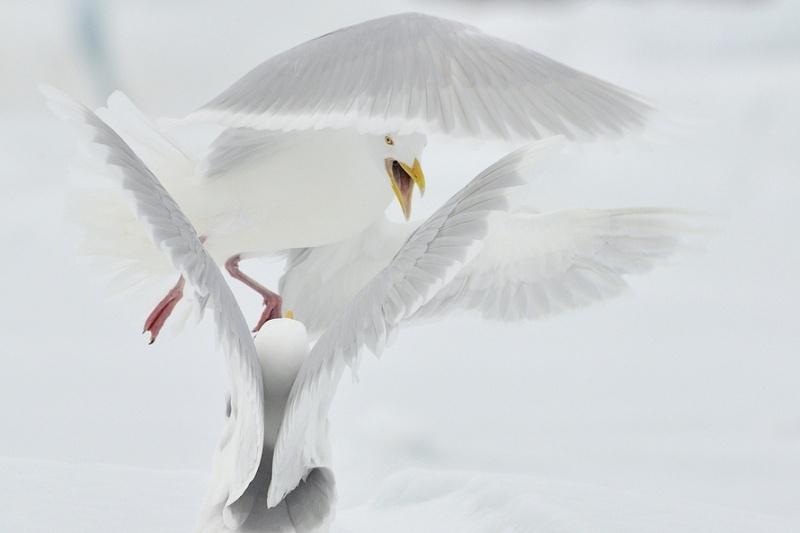 """Zdjęcie """"Sprzeczka"""" otrzymało Grand Prix w 7 edycji Wielkiego Konkursu Fotograficznego National Geographic. (Fot. Michał Jastrzębski)"""