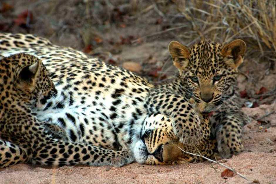 Życie afrykańskich zwierząt