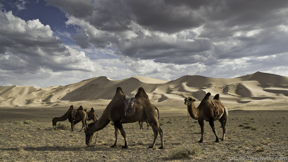 Wydmy Khongoryn Els na Pustyni Gobi