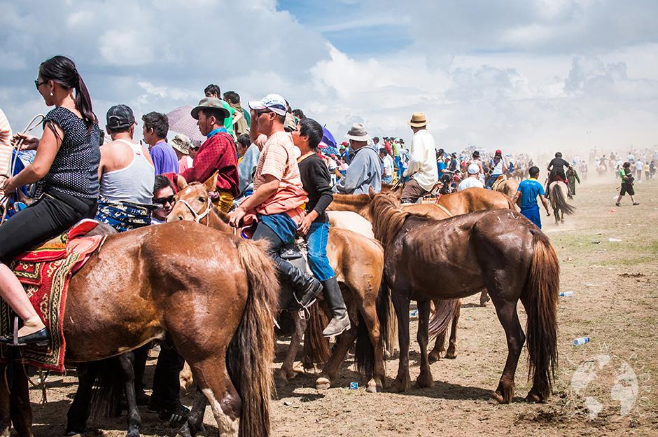 konie mongolskie