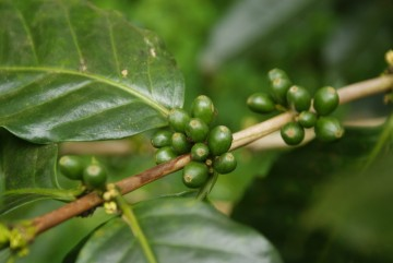 To kawa była pierwszą wielką pasją Claudio. (Fot. Emilia Wojciechowska)