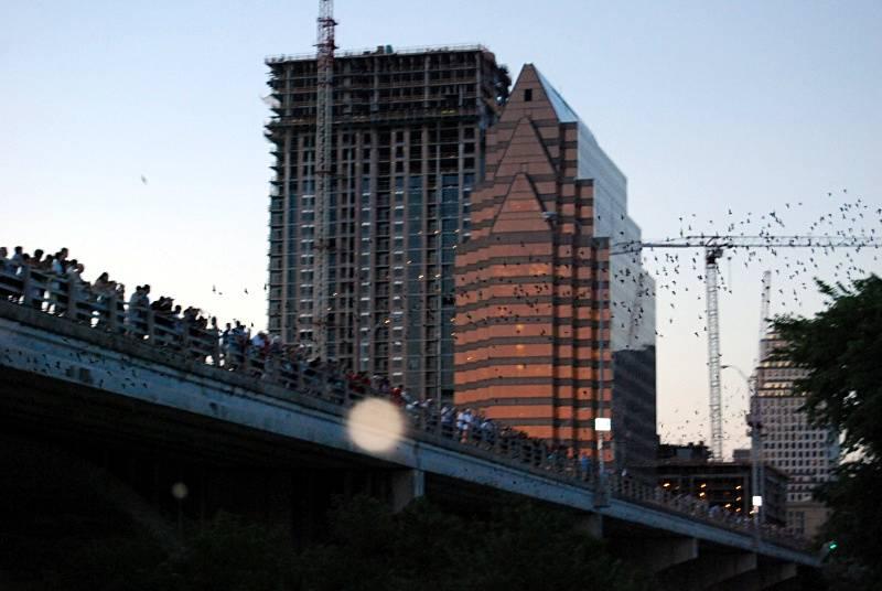 Nietoperze z Austin w Teksasie