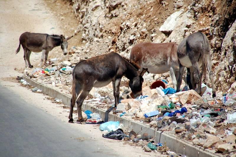 Osły w stercie śmieci. Podróż przez Albanię
