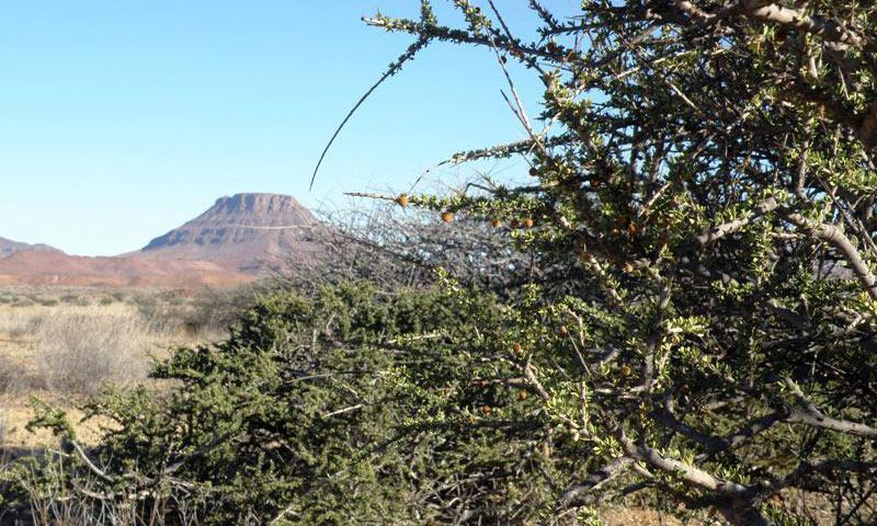 Roślinność Namibii