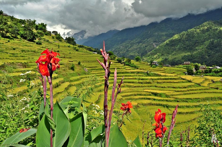 Podróż do Nepalu - zdjęcia z Himalajów