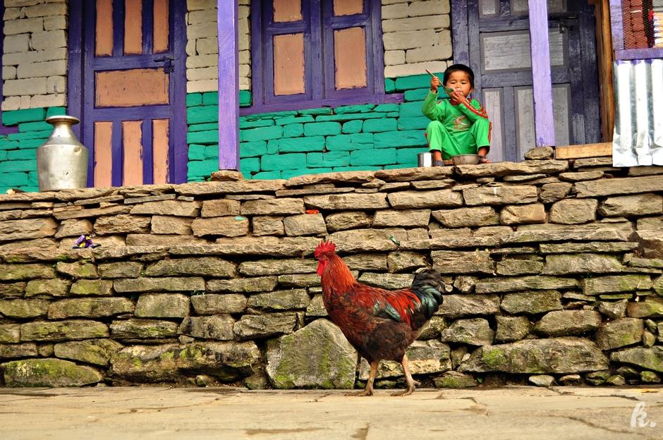 Dyiecko i Kura w Himalajach