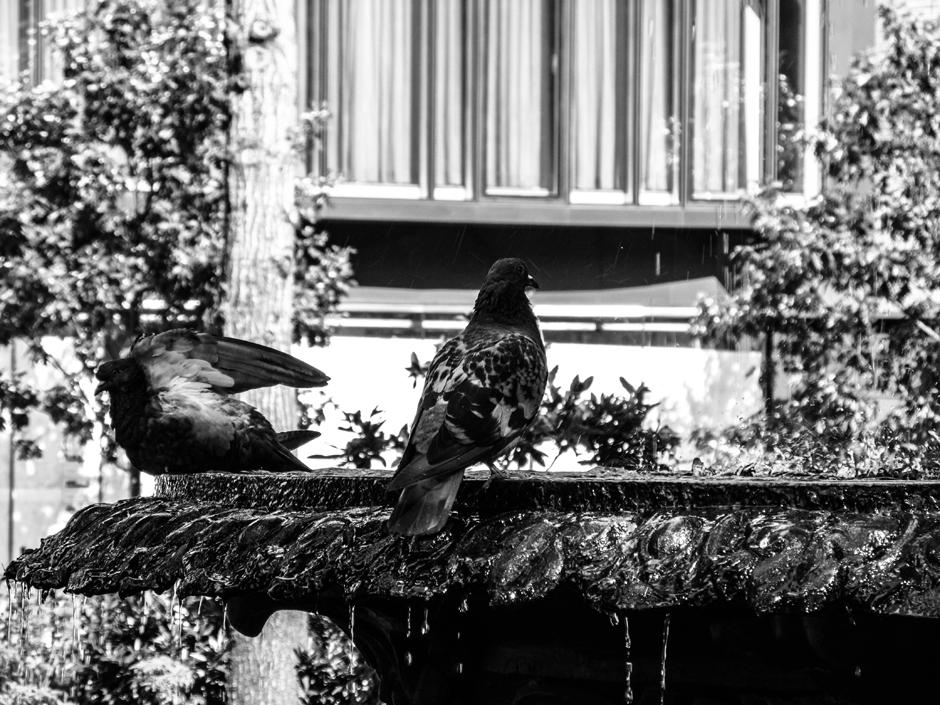 Ptaki w Nowym Jorku - foto