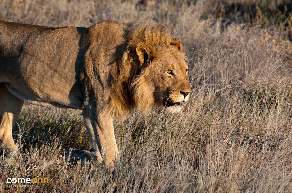 Safari w Namibii - zdjęcia z podróży