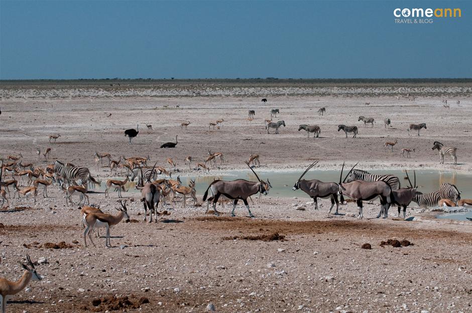 Dzikie zwierzęta - safari w Afryce