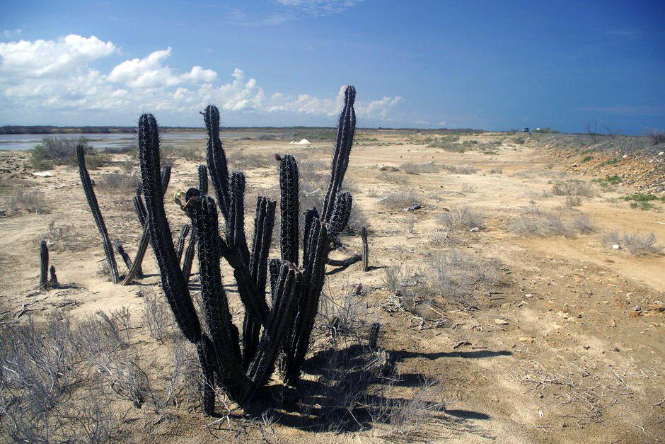 Kaktus - zdjęcia z rowerowej podróży przez Kolumbię
