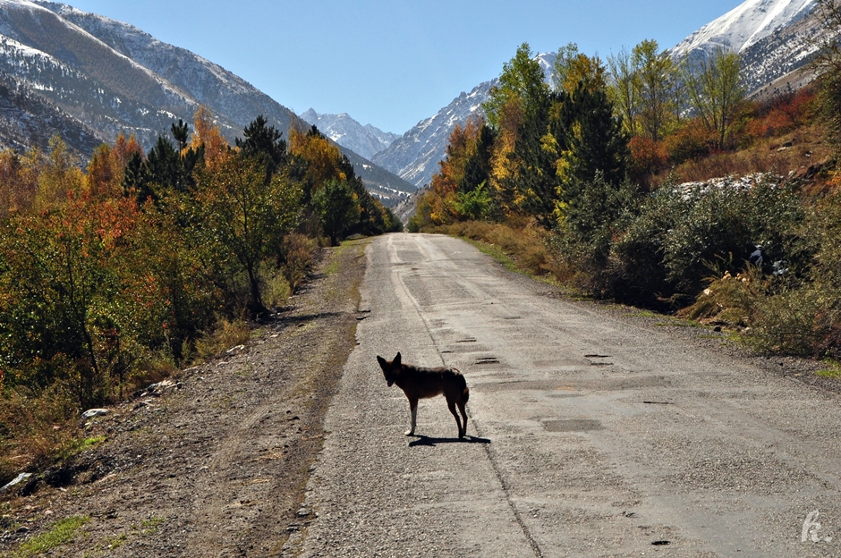 Park Ala Arcza - zdjęcia z podróży przez Kirgistan