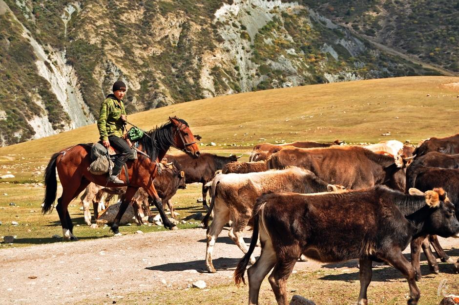 Kirgiski pasteż - zdjęcia z podróży na wschód