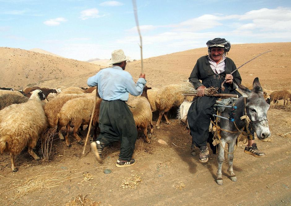 Pasterze z gór Zagros - zdjęcia Łukasza Supergana