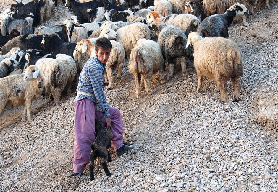 Stado owiec w irańskich górach Zagros - zdjęcia z wyprawy Łukasza Supergana