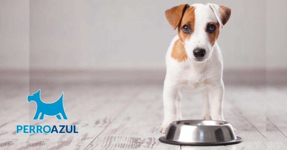 Alimento para cachorros, ¿cual es el mejor?