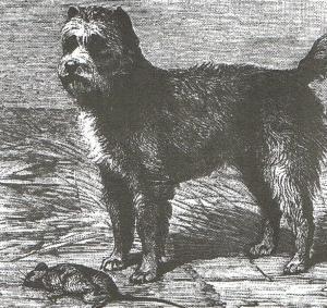 El origen de los perros