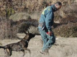 """alt=""""perro busqueda personas Guardia Civil"""""""