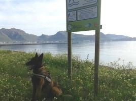 """alt=""""perro detector veneno Pollença"""""""